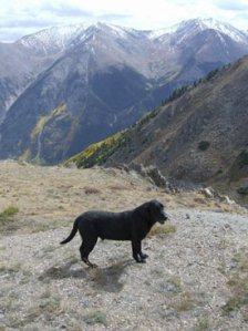 Drake at 14,000 ft. Columbine Mine Trail, Colorado.